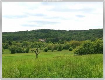 Unverbaubarer Blick ins Grüne  Willkommen zu Hause in Kelkheim, 65779 Kelkheim, Doppelhaushälfte